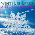 Winter Suprise Auto